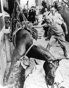 Tony the Horse